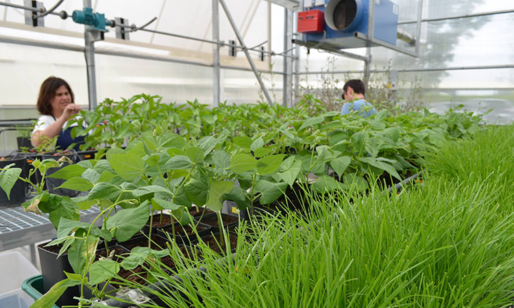 Sustainable Agro Solutions, d'Almacelles, exporta a Miami